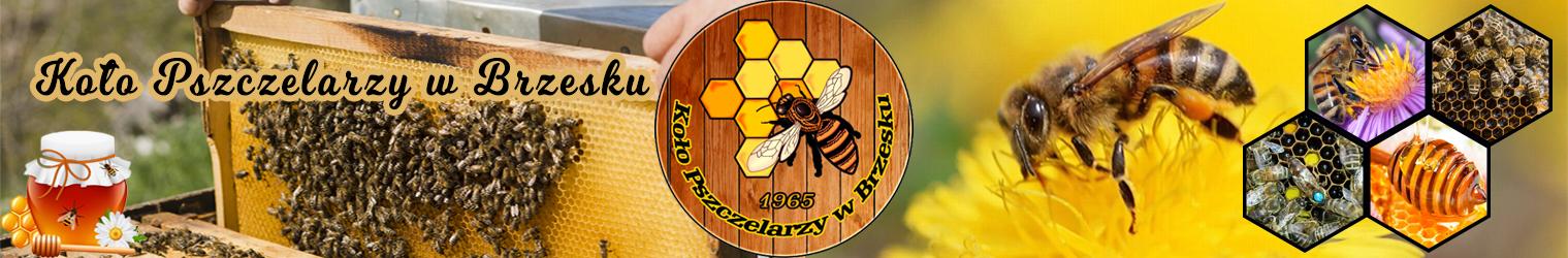Koło Pszczelarzy w Brzesku
